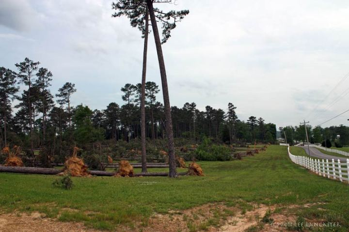 Nearly all the trees on this hillside were downed by the storms on Wednesday