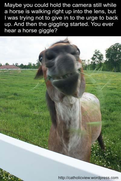 Look, it's a horse, er, an alpaca, no, a llama, wait, it's a horse...I think!